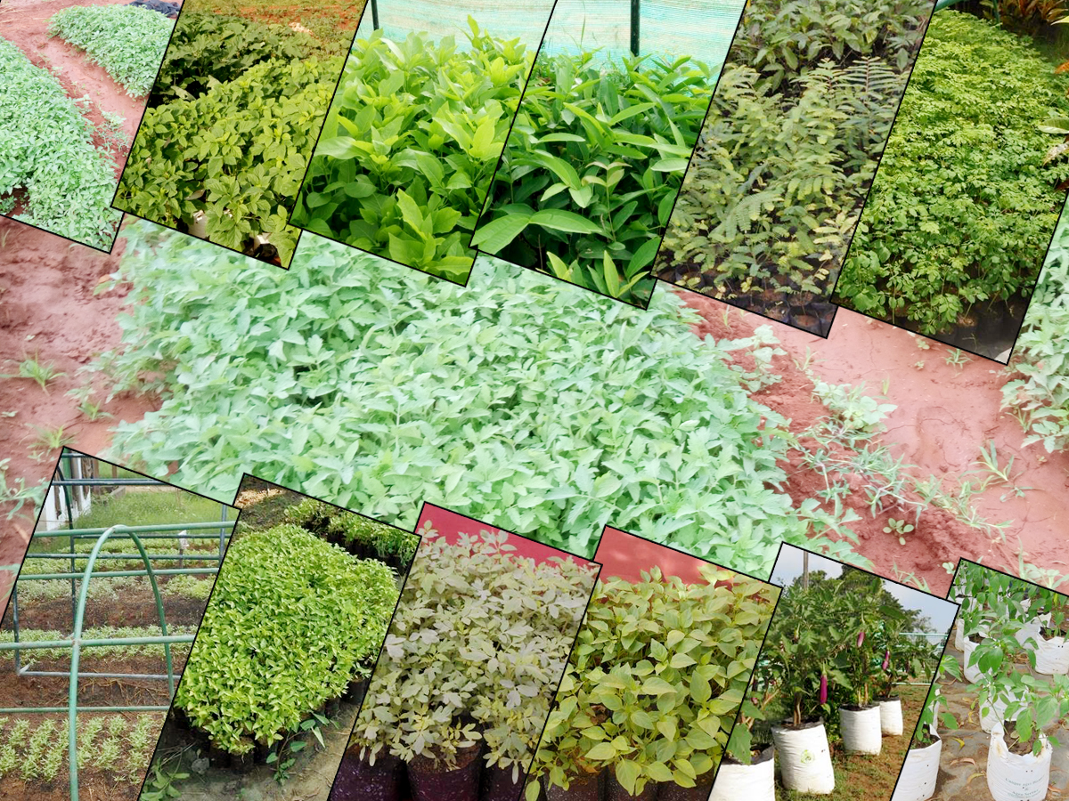 Mobile Sales for Vegetables Seedlings, Fruit Plants and Other Tree Plants